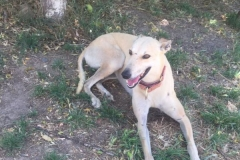 Ana relaxing after a walk to the river - dogs for adoption SOS Animals Spain