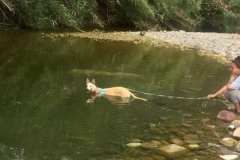 Ana enjoying cooling off in the river - dogs for adoption SOS Animals Spain