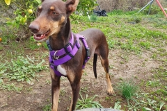 Annie posing for the camera - dogs for adoption SOS Animals Spain