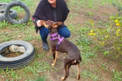 Annie with her foster mum visiting our shelter - dogs for adoption SOS Animals Spain
