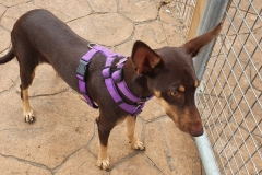 Annie is a friendly girl who loves cuddles - dogs for adoption SOS Animals Spain