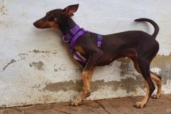 Annie was a bit unsure to begin with at her first photo shoot - dogs for adoption SOS Animals Spain