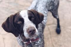 Beautiful Bea - dogs for adoption SOS Animals Spain