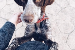 Bea and baby bump - dogs for adoption SOS Animals Spain