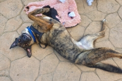 Ben pulling his grinch face - dogs for adoption SOS Animals Spain