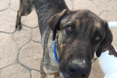 Ben has the most beautiful big brown eyes - dogs for adoption SOS Animals Spain