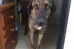 Ben exploring the doggy kitchen - dogs for adoption SOS Animals Spain