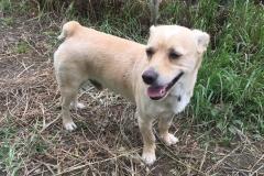 Friendly little boy Carlos - dogs for adoption SOS Animals Spain