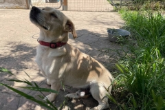 Carlos in the garden at the shelter - dogs for adoption SOS Animals Spain