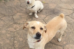 Carlos with little brother Diego in the background - dogs for adoption SOS Animals Spain