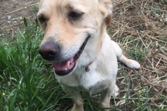 Carlos is growing in confidence each day - dogs for adoption SOS Animals Spain