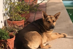 Chica loves to sit in the garden and enjoy the sunshine - dogs for adoption SOS Animals Spain
