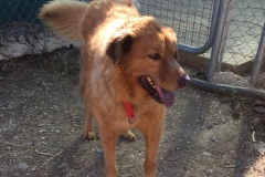 Digby getting used to shelter life - dogs for adoption SOS Animals Spain