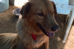 Digby relaxing in his new environment - dogs for adoption SOS Animals Spain