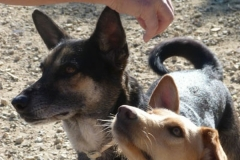 Hardy and friend - sponsor dogs at SOS Animals Spain