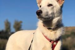 Hilton enjoying his walk - dogs for adoption SOS Animals Spain