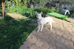 Ivy exploring the shelter garden - sponsor dogs at SOS Animals Spain