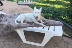 Ivy enjoying the sunshine - sponsor dogs at SOS Animals Spain