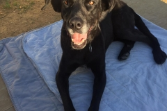 Jo loves lying on soft blankets in the sunshine - dogs for adoption SOS Animals Spain