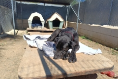 Jo settling into our shelter - dogs for adoption SOS Animals Spain