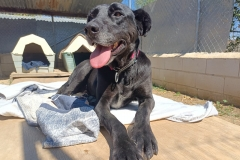 Jo relaxing in the sunshine - dogs for adoption SOS Animals Spain