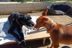 Jo and Binke - dogs for adoption SOS Animals Spain