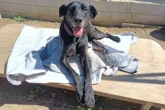 Gentle boy Jo - dogs for adoption SOS Animals Spain