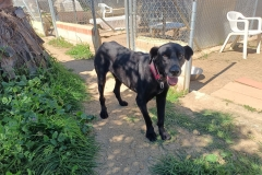 Jo exploring the gardens at our shelter - dogs for adoption SOS Animals Spain