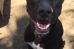 sos-animals-spain-dogs-for-adoption-lola-2