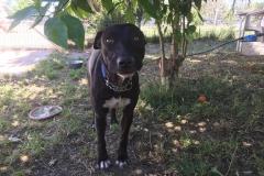 Lola exploring the garden - dogs for adoption SOS Animals Spain
