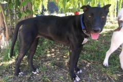 Lola is slowly adapting to shelter life - dogs for adoption SOS Animals Spain