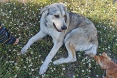 Lucky relaxing with a friend - dogs for adoption SOS Animals Spain