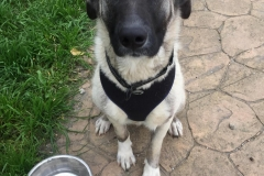 Manuel waiting for dinner time - dogs for adoption SOS Animals Spain