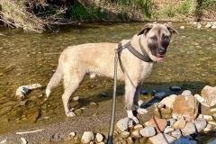 Manuel enjoying the river - dogs for adoption SOS Animals Spain