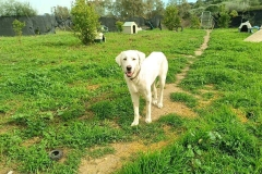 Naomi in the kennel garden at the shelter dogs for adoption SOS Animals Spain