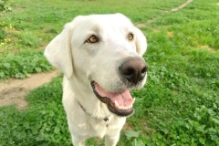 Gentle Naomi - dogs for adoption SOS Animals Spain