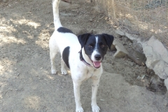 Happy boy Nils - dogs for adoption at SOS Animals Spain