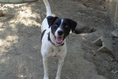 Smiling Nils - dogs for adoption at SOS Animals Spain