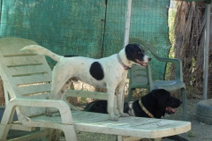 Nils relaxing at the shelter - dogs for adoption at SOS Animals Spain