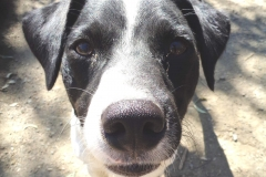 Bodeguero Nils - dogs for adoption at SOS Animals Spain