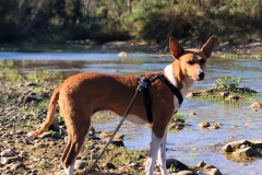 Reina walking by the river - sponsor dogs at SOS Animals Spain