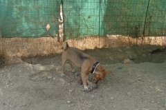 Investigating the playpen - dogs for adoption at SOS Animals Spain