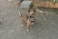 Happy boy Ronnie - dogs for adoption at SOS Animals Spain