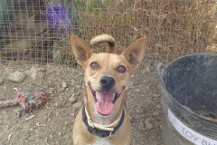 Smiling Ronnie - dogs for adoption at SOS Animals Spain