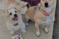 Ronnie and Teija - dogs for adoption at SOS Animals Spain
