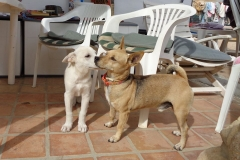 Ronnie and friend - dogs for adoption at SOS Animals Spain