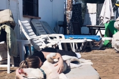 Samson and volunteer cuddle time - sponsor dogs at SOS Animals Spain