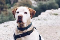 Samson posing for the camera - sponsor dogs at SOS Animals Spain