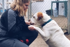 Samson giving a paw to one of our volunteers - sponsor dogs at SOS Animals Spain