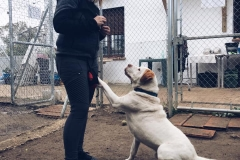 Samson being a charmer - sponsor dogs at SOS Animals Spain
